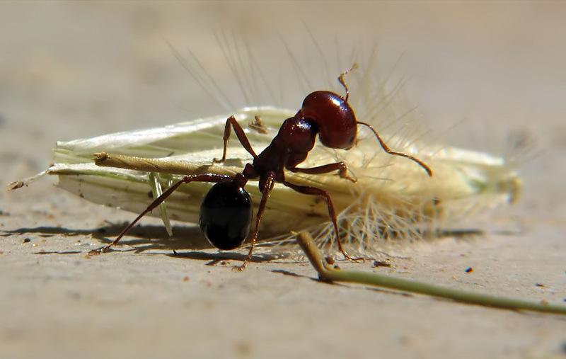 Photo of متى يأخذ النمل حقه بلا خجل؟