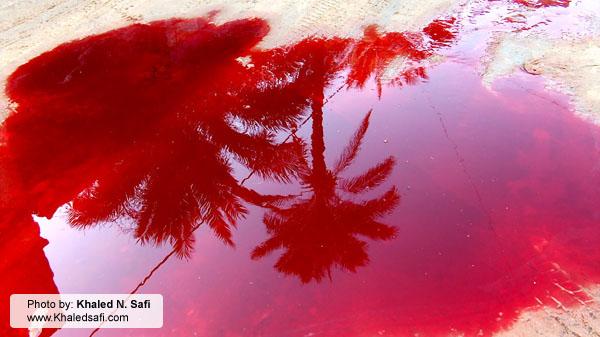 الدماء في غزة ترسم لوحة فيها معالم الحياة